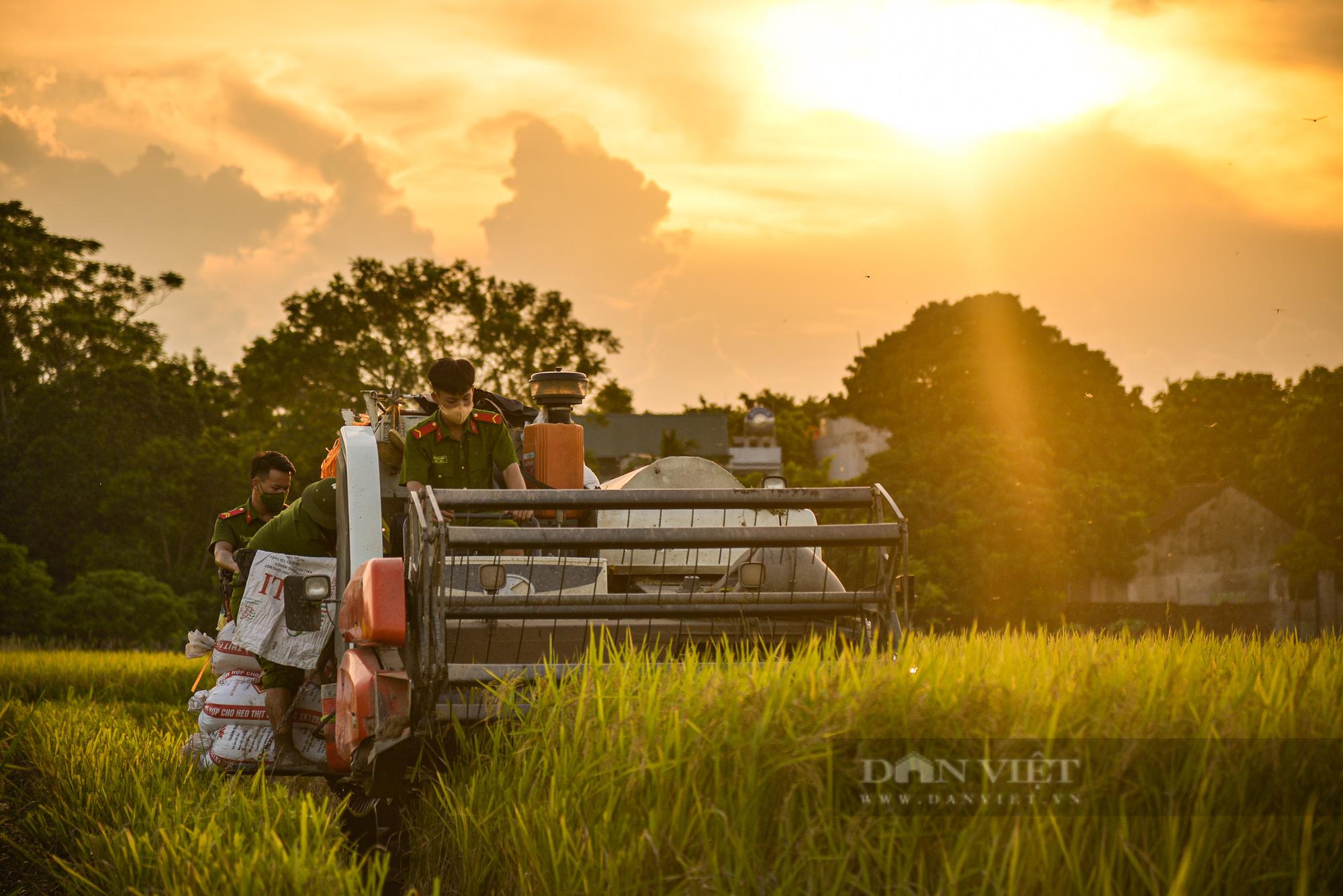 Hình ảnh chiến sĩ công an lội ruộng, ăn cơm vội để thu hoạch lúa giúp 141 hộ ở vùng cách ly y tế - Ảnh 5.