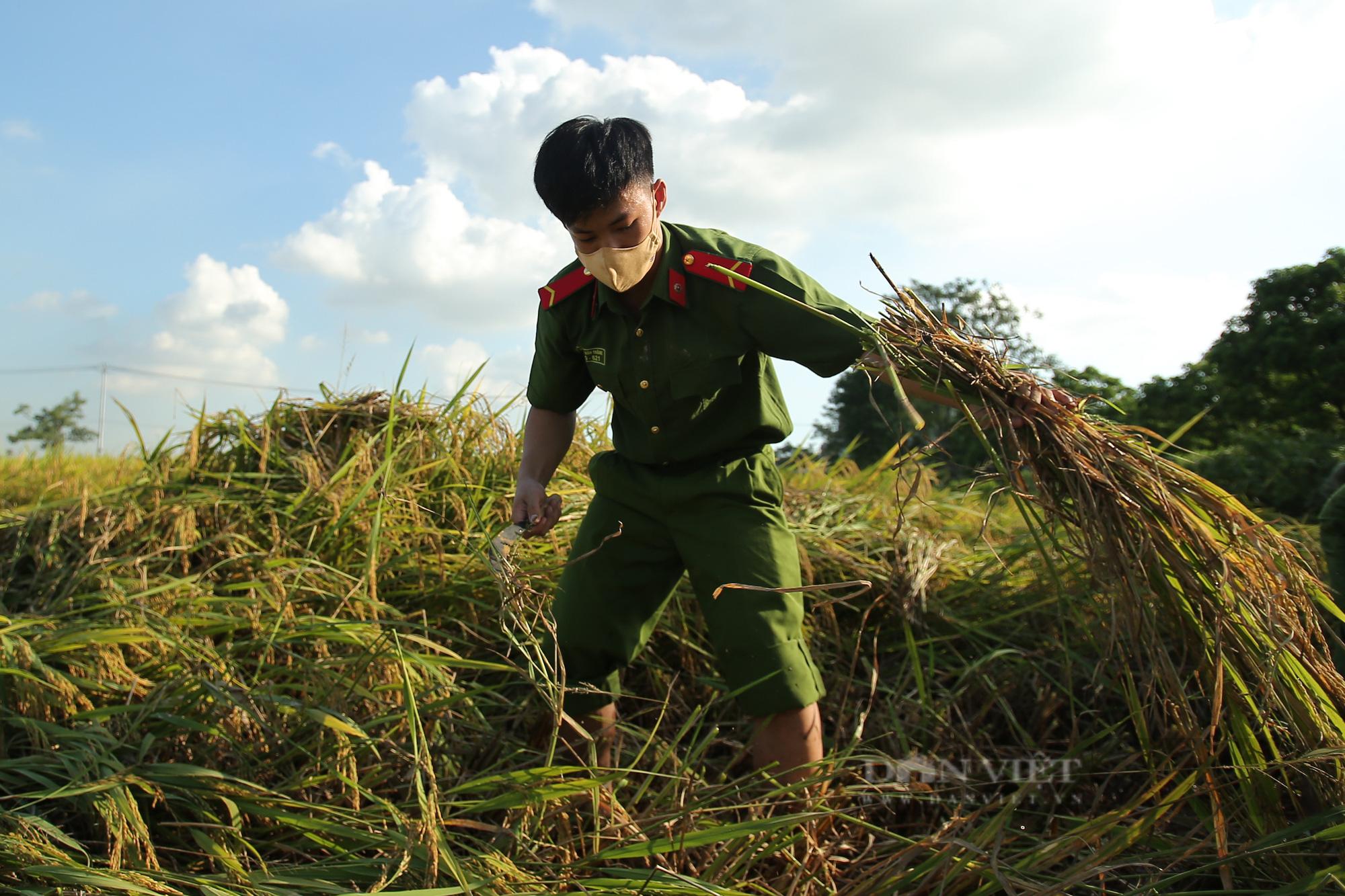 Hình ảnh chiến sĩ công an lội ruộng, ăn cơm vội để thu hoạch lúa giúp 141 hộ ở vùng cách ly y tế - Ảnh 6.