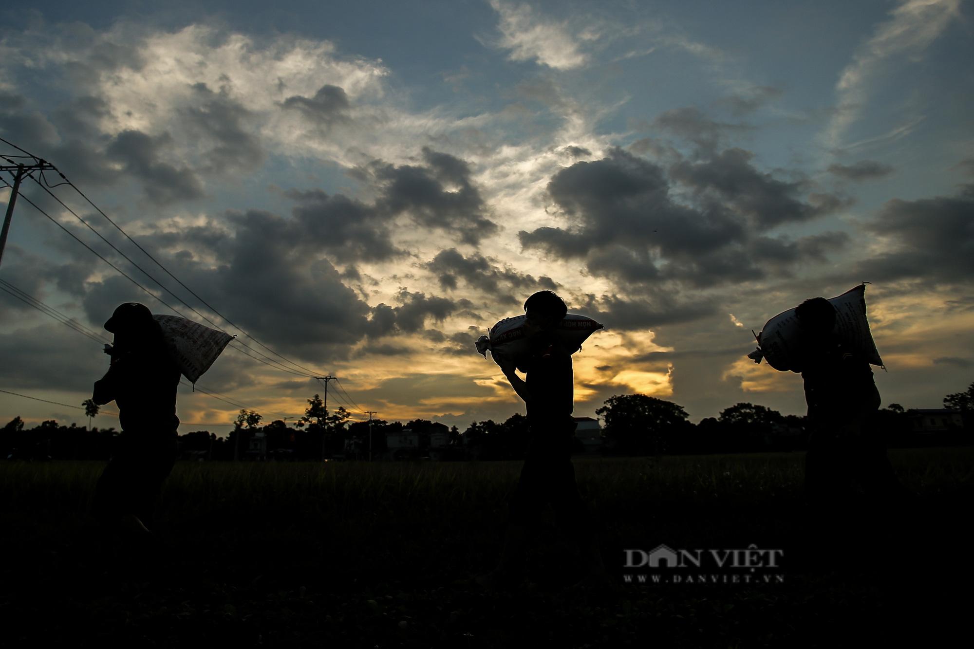 Hình ảnh chiến sĩ công an lội ruộng, ăn cơm vội để thu hoạch lúa giúp 141 hộ ở vùng cách ly y tế - Ảnh 8.