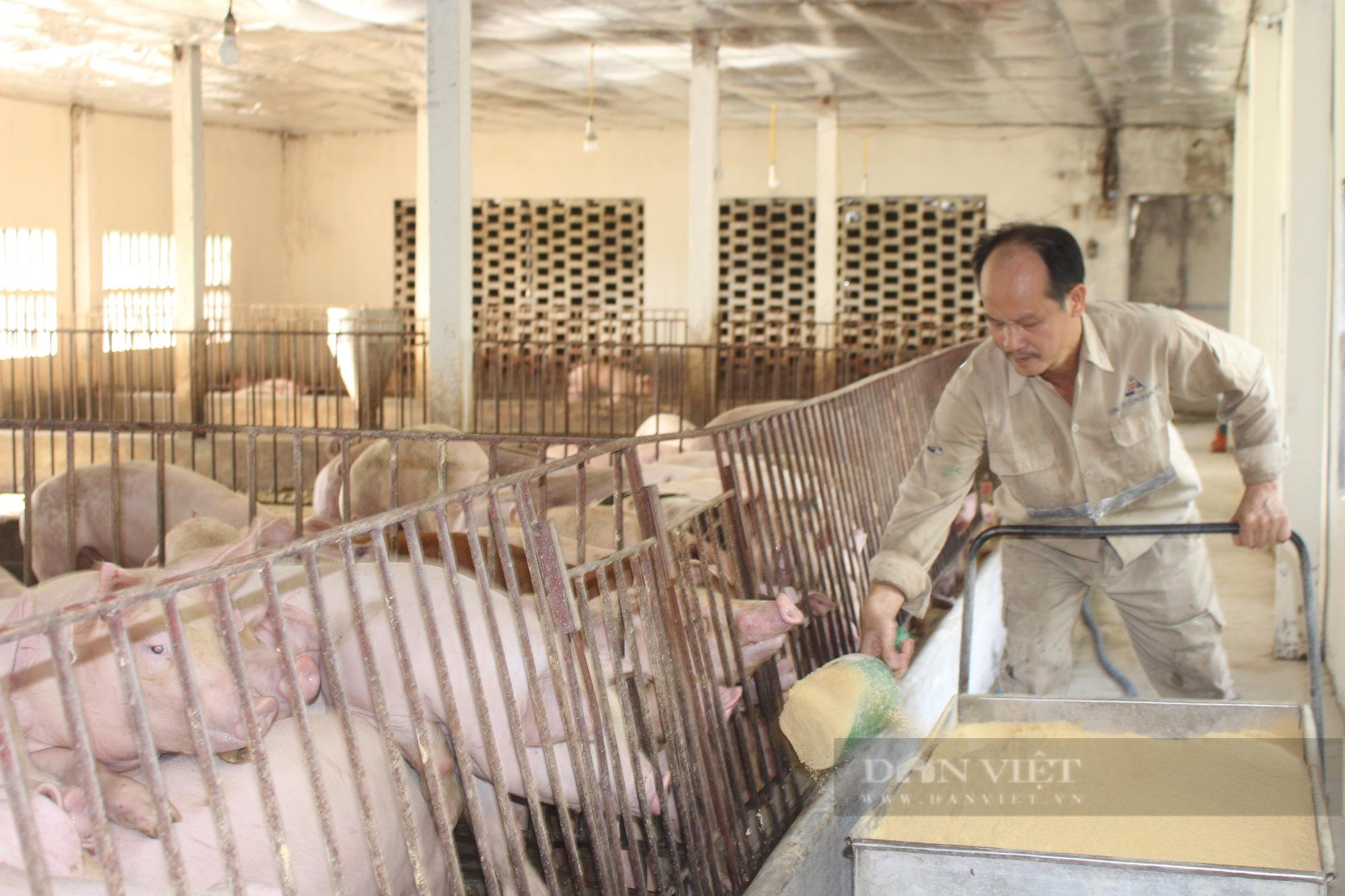 Giữa đại dịch Covid-19, chăm lợn bằng thảo dược, nhạc trữ tình... anh nông dân ở Nam Định luôn đắt hàng  - Ảnh 1.