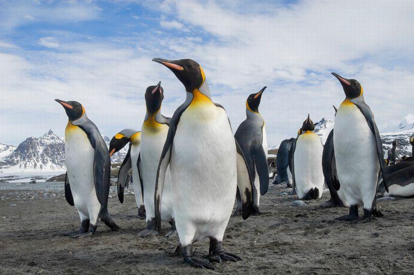 Bằng chứng cho thấy chim cánh cụt thực chất chính là người ngoài hành tinh - Ảnh 1.