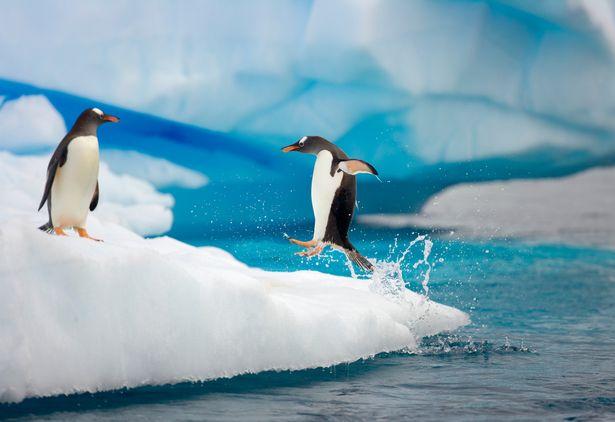 Bằng chứng cho thấy chim cánh cụt thực chất chính là người ngoài hành tinh - Ảnh 2.