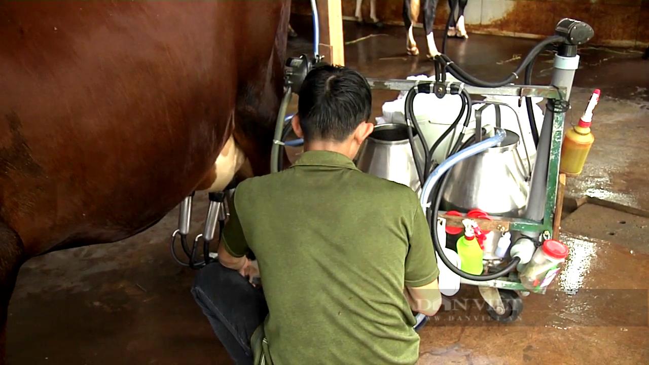 """Sửa lại """"nhịp tim"""" cho đàn bò sữa, anh nông dân 8x khiến doanh nghiệp thu mua sữa bò phải trả thêm tiền - Ảnh 5."""