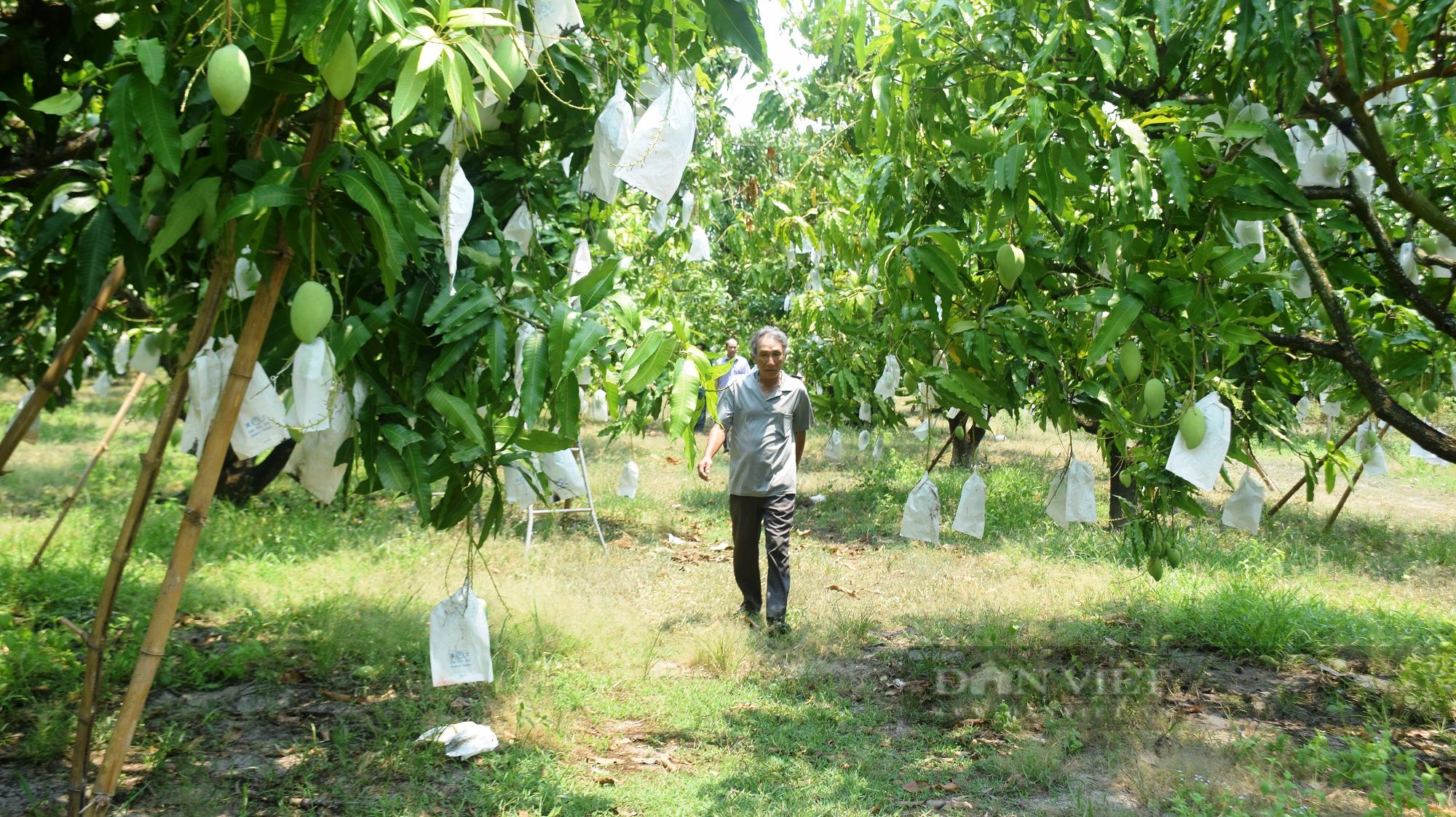 Nhờ cách này, 'thủ phủ' trồng xoát cát ở Bình Định không lo thiếu nước - Ảnh 1.