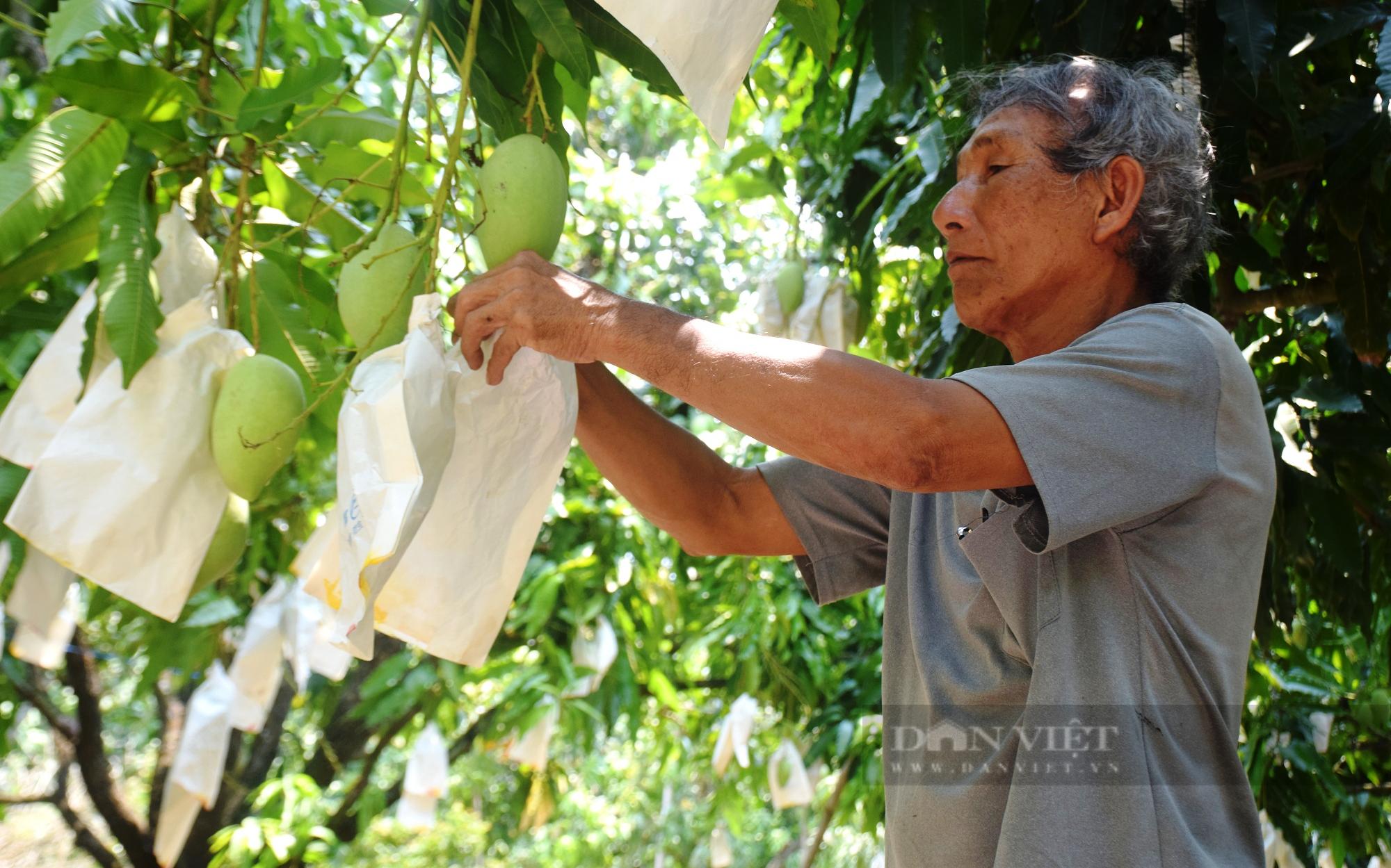 Nhờ cách này, 'thủ phủ' trồng xoát cát ở Bình Định không lo thiếu nước - Ảnh 2.