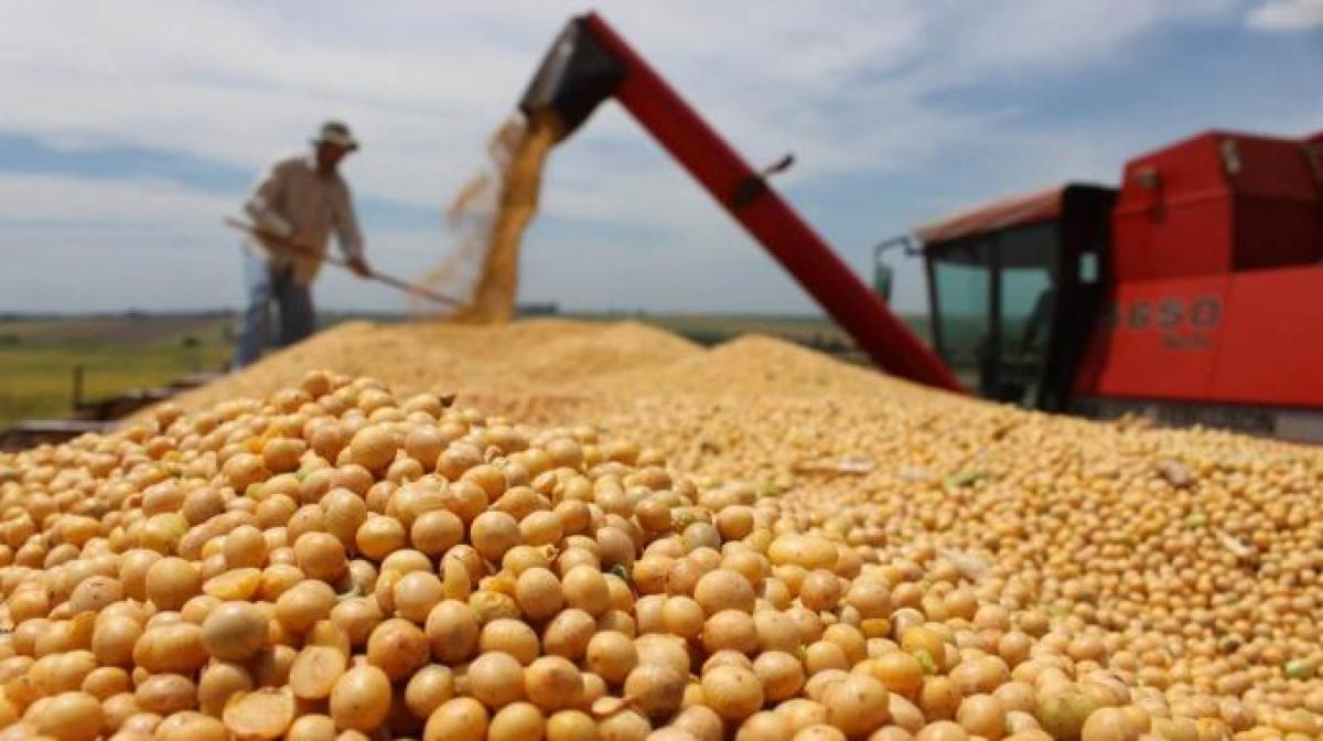 Nghịch lý: Có thế mạnh nông nghiệp nhưng Việt Nam vẫn chi 3 tỷ USD nhập khẩu thức ăn chăn nuôi - Ảnh 2.