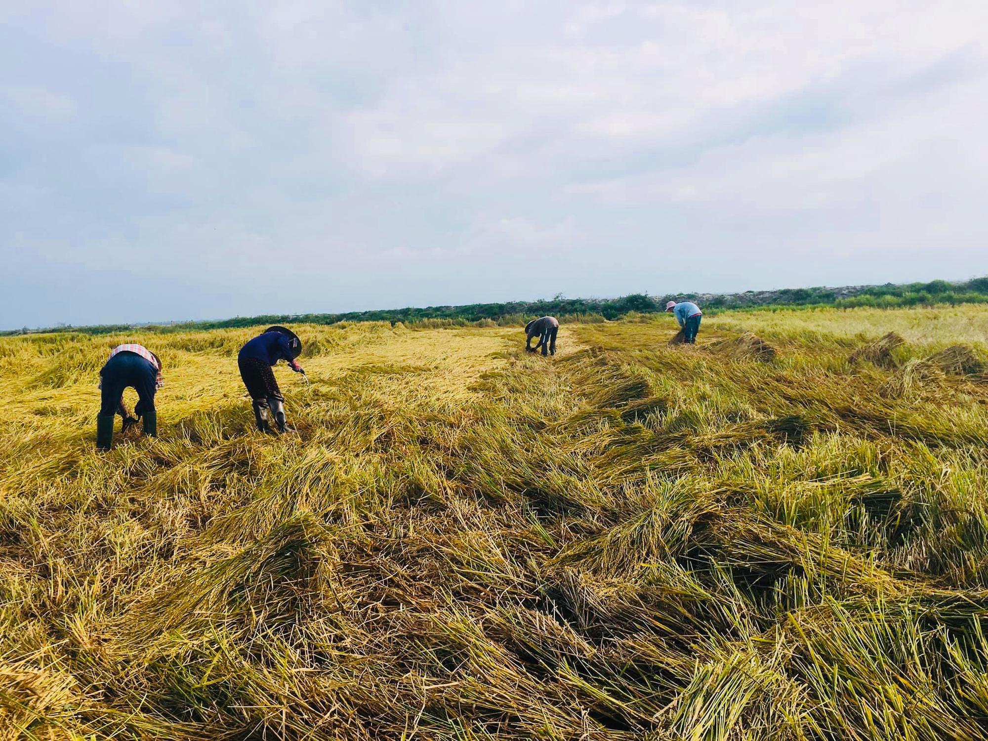 Kể chuyện làng: Lục ký ức trên cánh đồng quê - Ảnh 1.