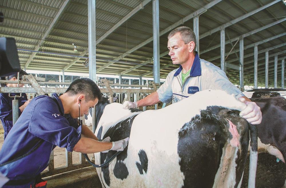 Cụm trang trại bò sữa đạt kỷ lục thế giới tại Việt Nam dưới góc nhìn của chuyên gia quốc tế - Ảnh 4.