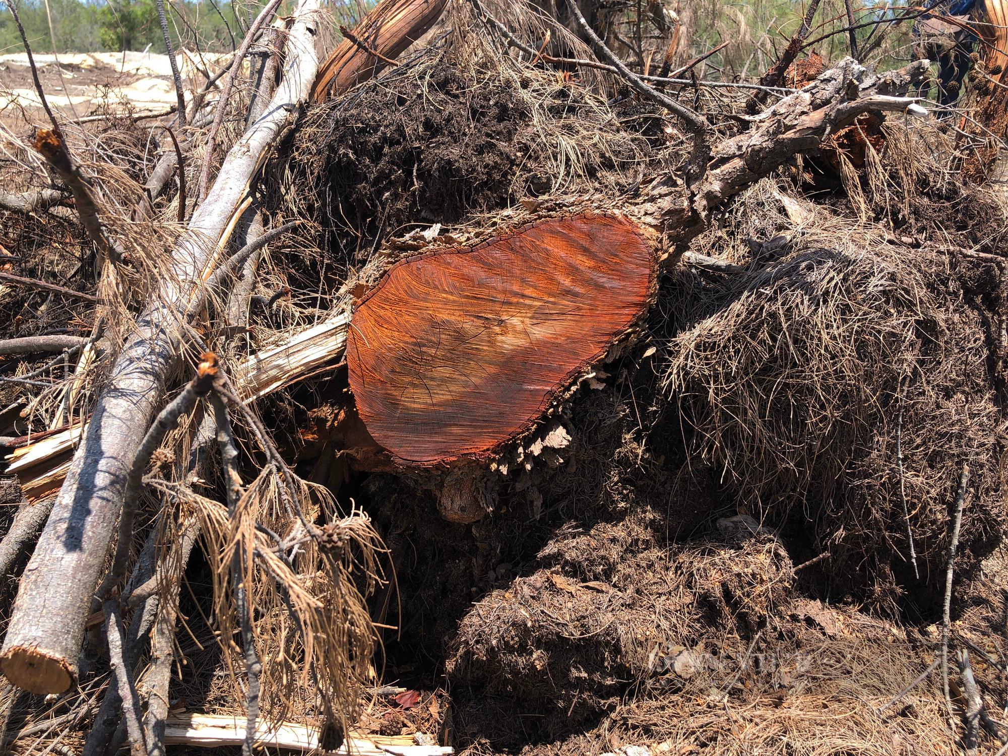 Tổng cục Lâm nghiệp lên tiếng sau 2 vụ phá rừng được phát hiện ở Bình Định