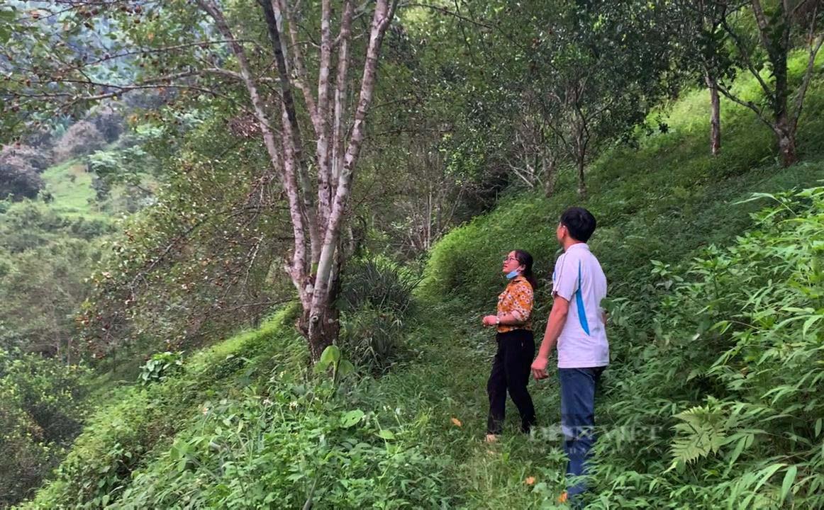 """Kỹ sư nông nghiệp người Tày lên núi chinh phục """"vùng đất khó"""" - Ảnh 2."""