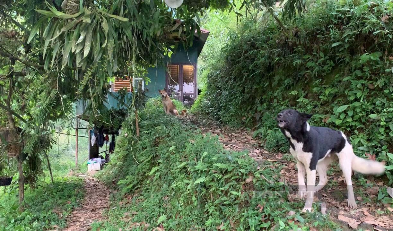 """Kỹ sư nông nghiệp người Tày lên núi chinh phục """"vùng đất khó"""" - Ảnh 3."""