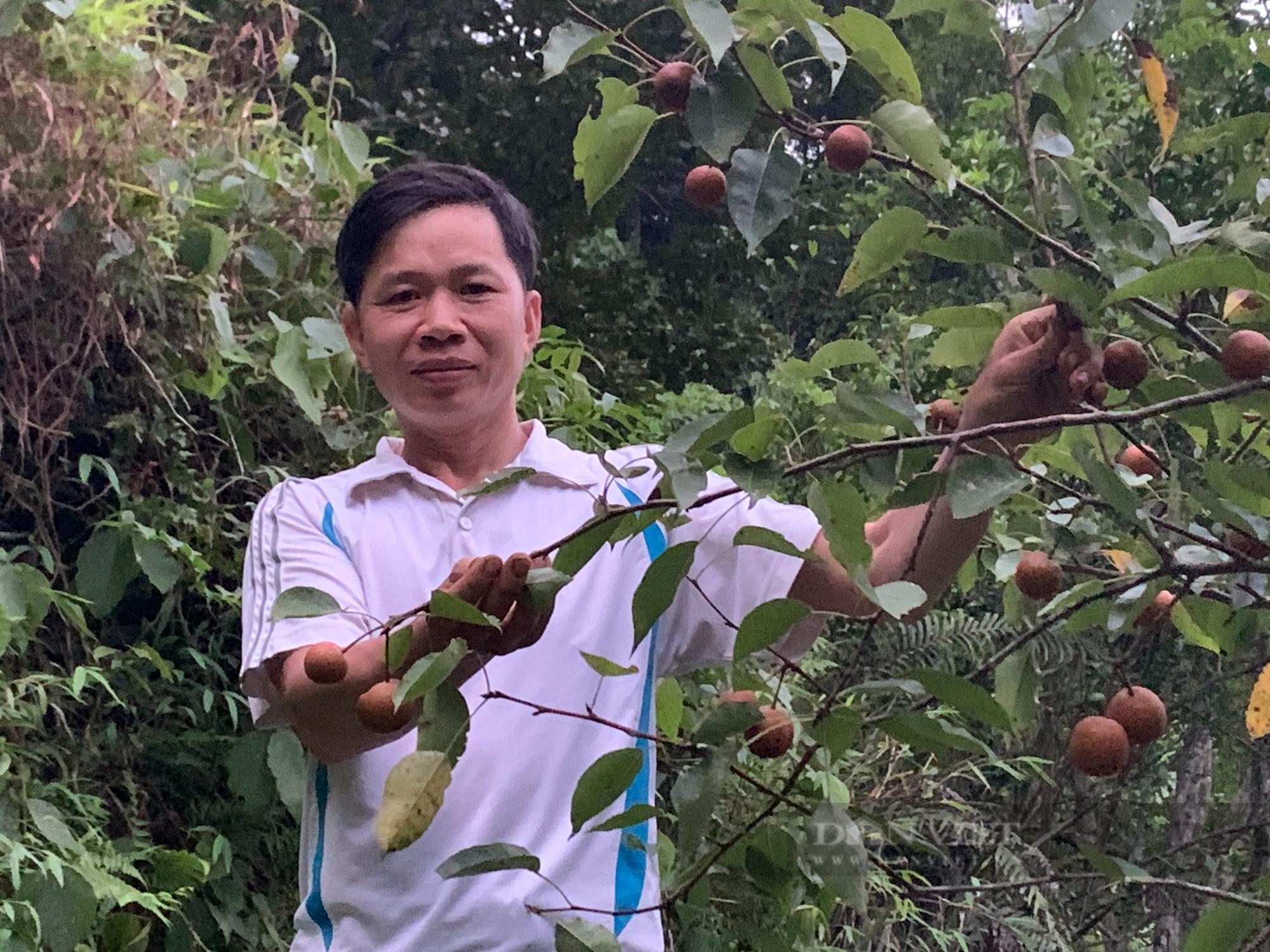 """Kỹ sư nông nghiệp người Tày lên núi chinh phục """"vùng đất khó"""" - Ảnh 4."""