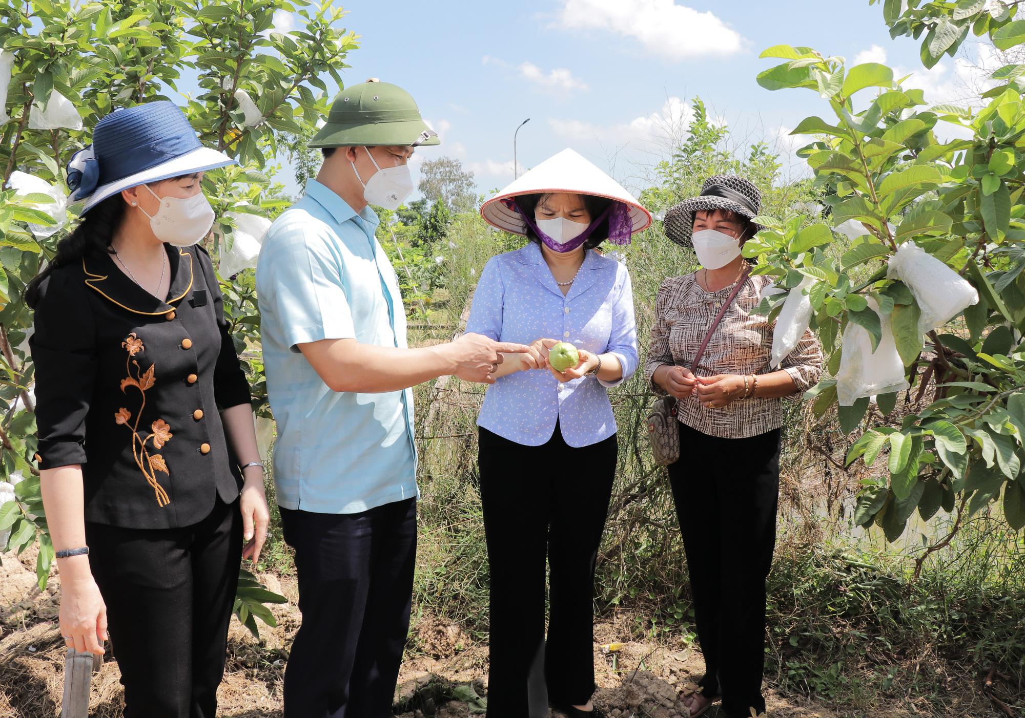 Bắc Ninh: Sẽ có nhiều chính sách hỗ trợ phát triển nông nghiệp, cao nhất là 5 tỷ đồng/dự án - Ảnh 2.