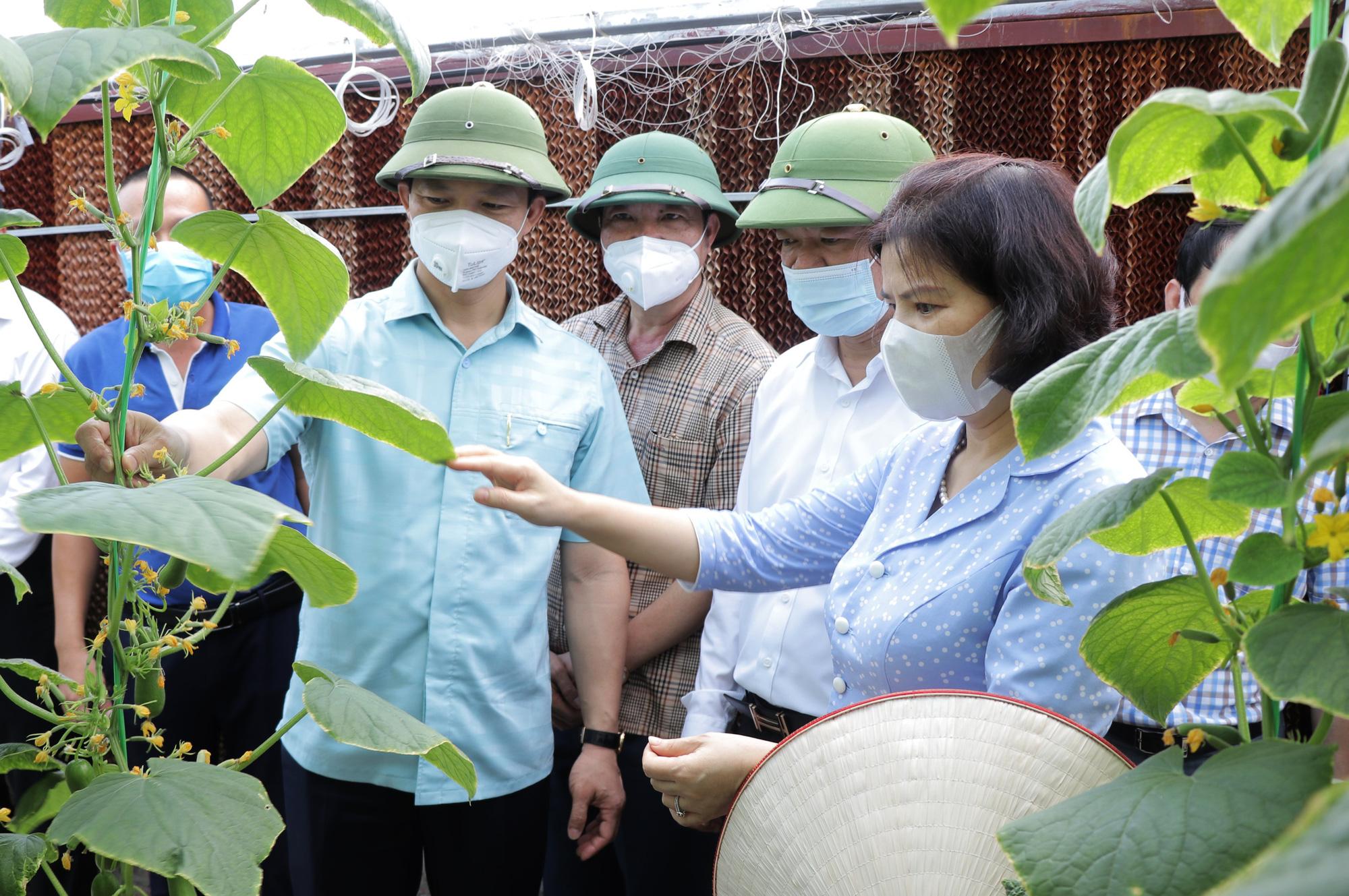 Bắc Ninh: Sẽ có nhiều chính sách hỗ trợ phát triển nông nghiệp, cao nhất là 5 tỷ đồng/dự án - Ảnh 1.