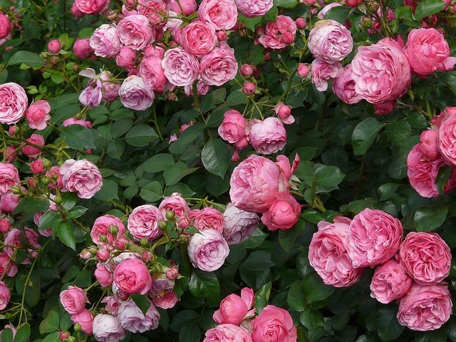Cuối tháng 9, 4 con giáp được quý nhân chỉ lối, thành công rực rỡ, đào hoa nở rộ - Ảnh 3.