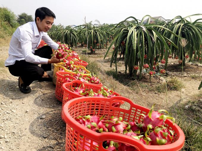 """Long An """"trải thảm đỏ"""" để nông dân đưa nông sản lên sàn - Ảnh 1."""