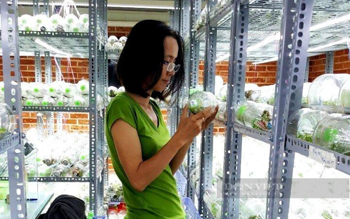 """TP.HCM: Nữ giám đốc 8x lai tạo vườn """"nữ hoàng của các loại hoa"""" độc, lạ giữa Sài thành - Ảnh 1."""