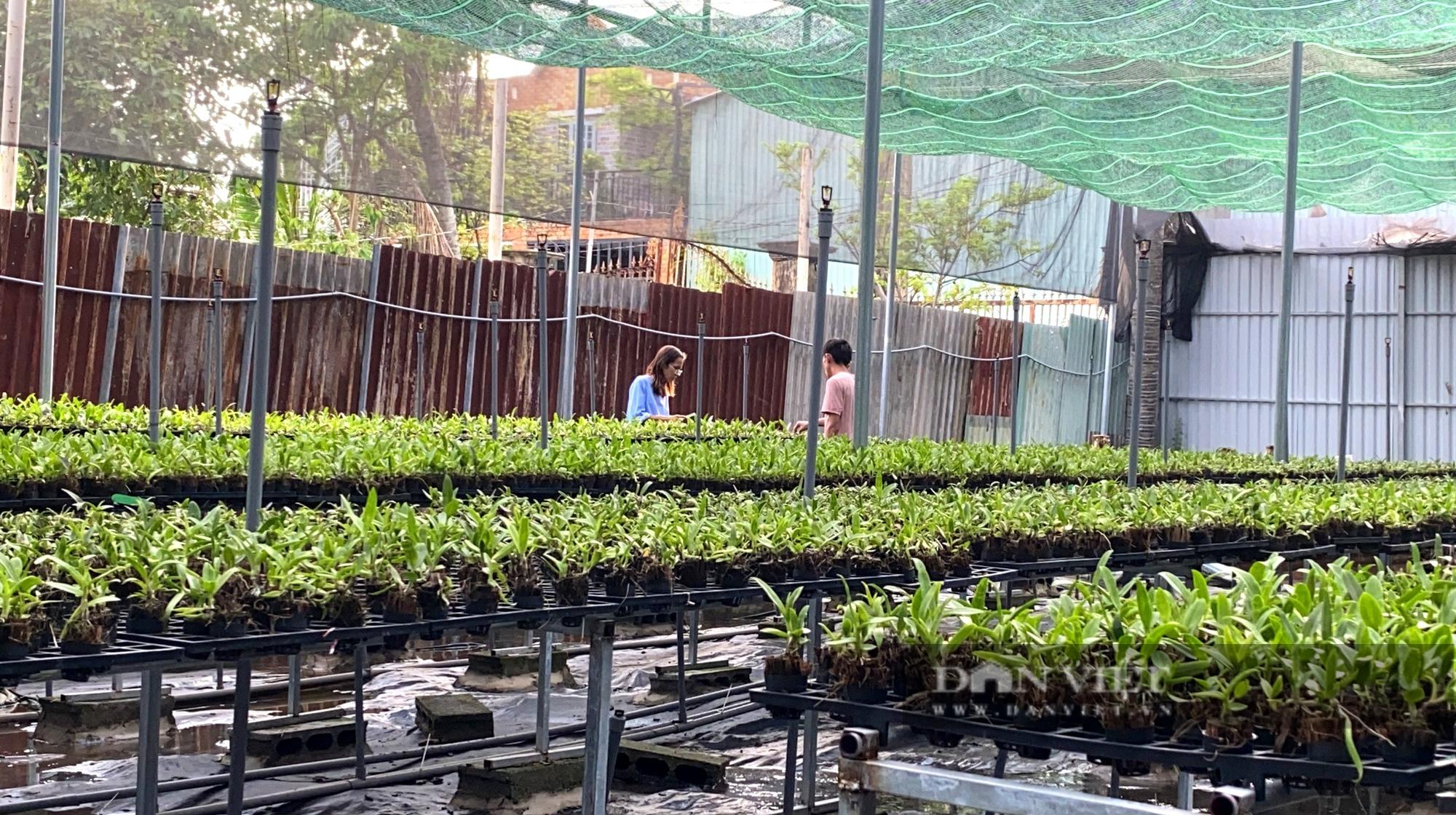 """TP.HCM: Nữ giám đốc 8x lai tạo vườn """"nữ hoàng của các loại hoa"""" độc, lạ giữa Sài thành - Ảnh 7."""