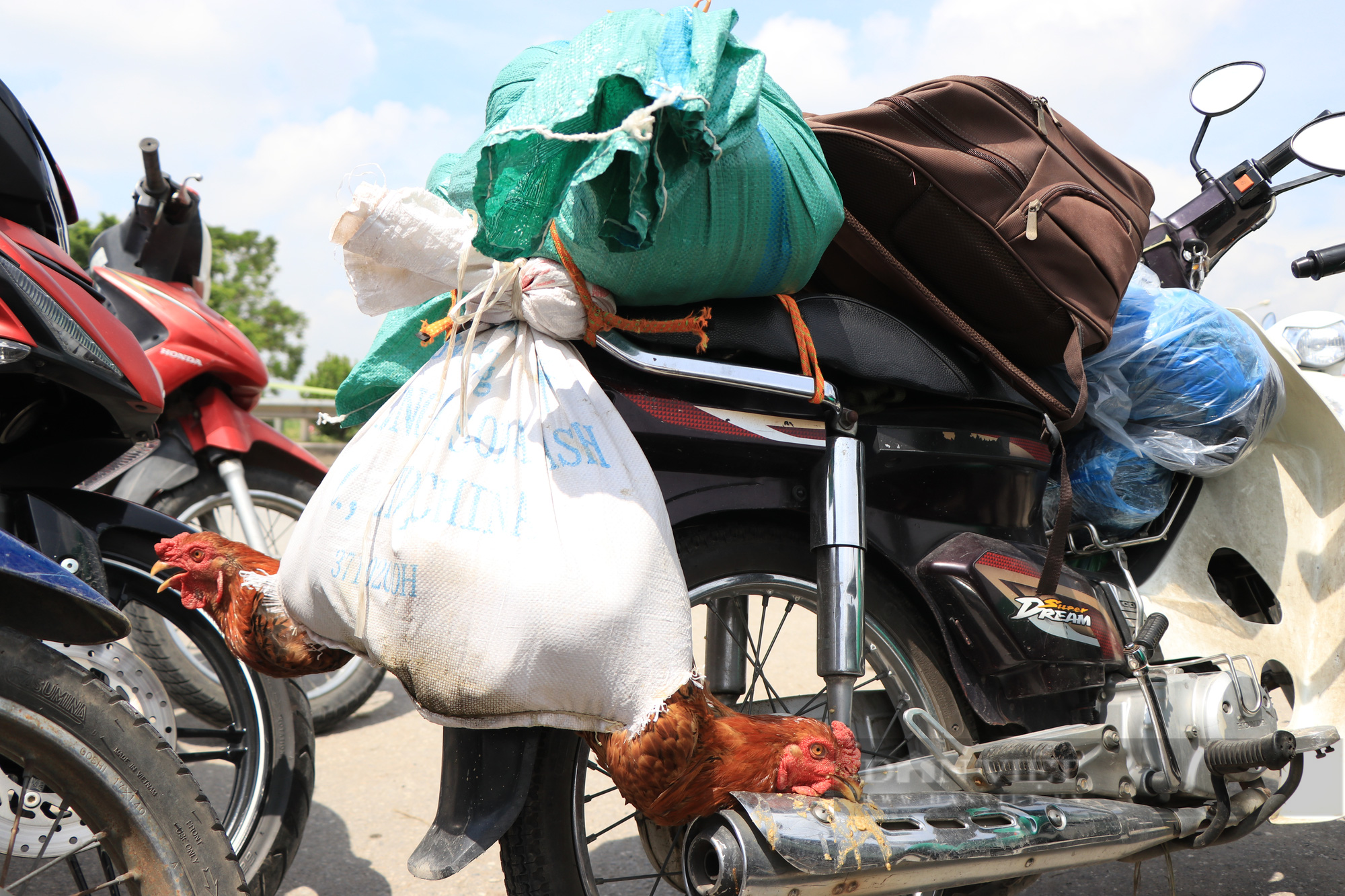 Trẻ nhỏ ngủ gục, đội nắng theo chân cha mẹ vượt hành trình hàng trăm km ra Hà Nội kiếm kế sinh nhai - Ảnh 5.