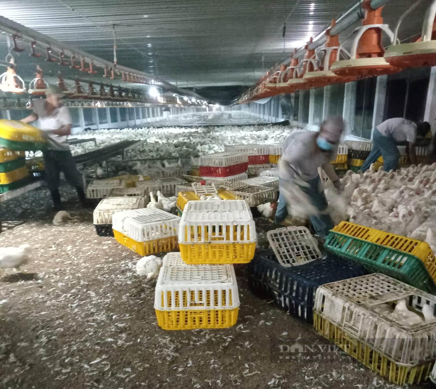 Giá gia cầm hôm nay 24/9: Giá gà công nghiệp giảm mạnh, giá vịt thịt ba miền neo ở mức cao - Ảnh 1.