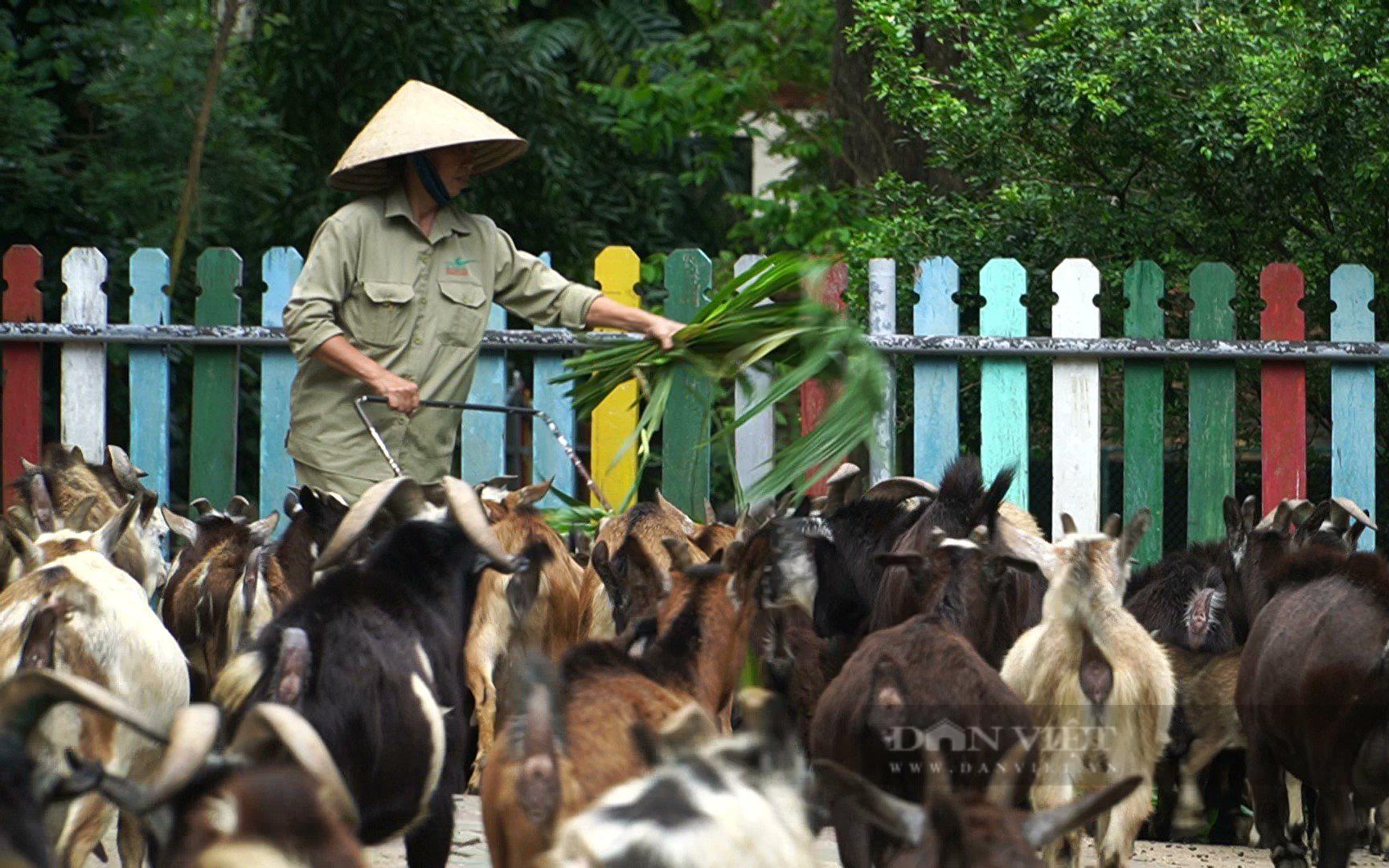 Thực hư việc lãnh đạo Thảo Cầm Viên Sài Gòn kêu gọi hỗ trợ kinh phí - Ảnh 1.