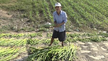 An Giang: Vùng đất dân đi ra sông cắt cây dại bán cũng kiếm được tiền - Ảnh 2.