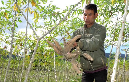 Việt Nam bán gần hết nông sản này cho Trung Quốc trộn vào thức ăn chăn nuôi rồi chi 3 tỷ USD nhập thứ khác - Ảnh 1.