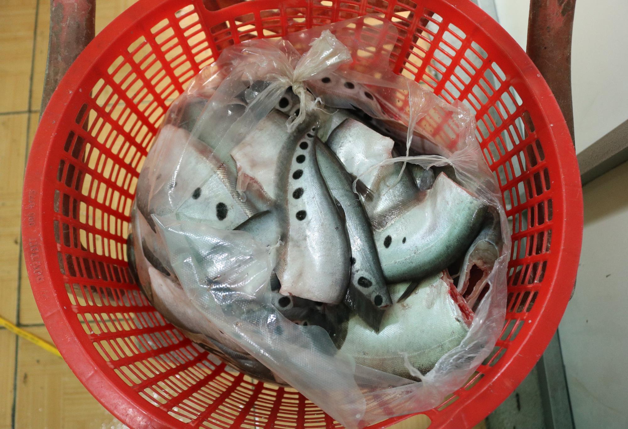 Gia Lai: Người dân thu hàng trăm triệu đồng nhờ nuôi loại dáng điệu, mỏng lép - Ảnh 3.
