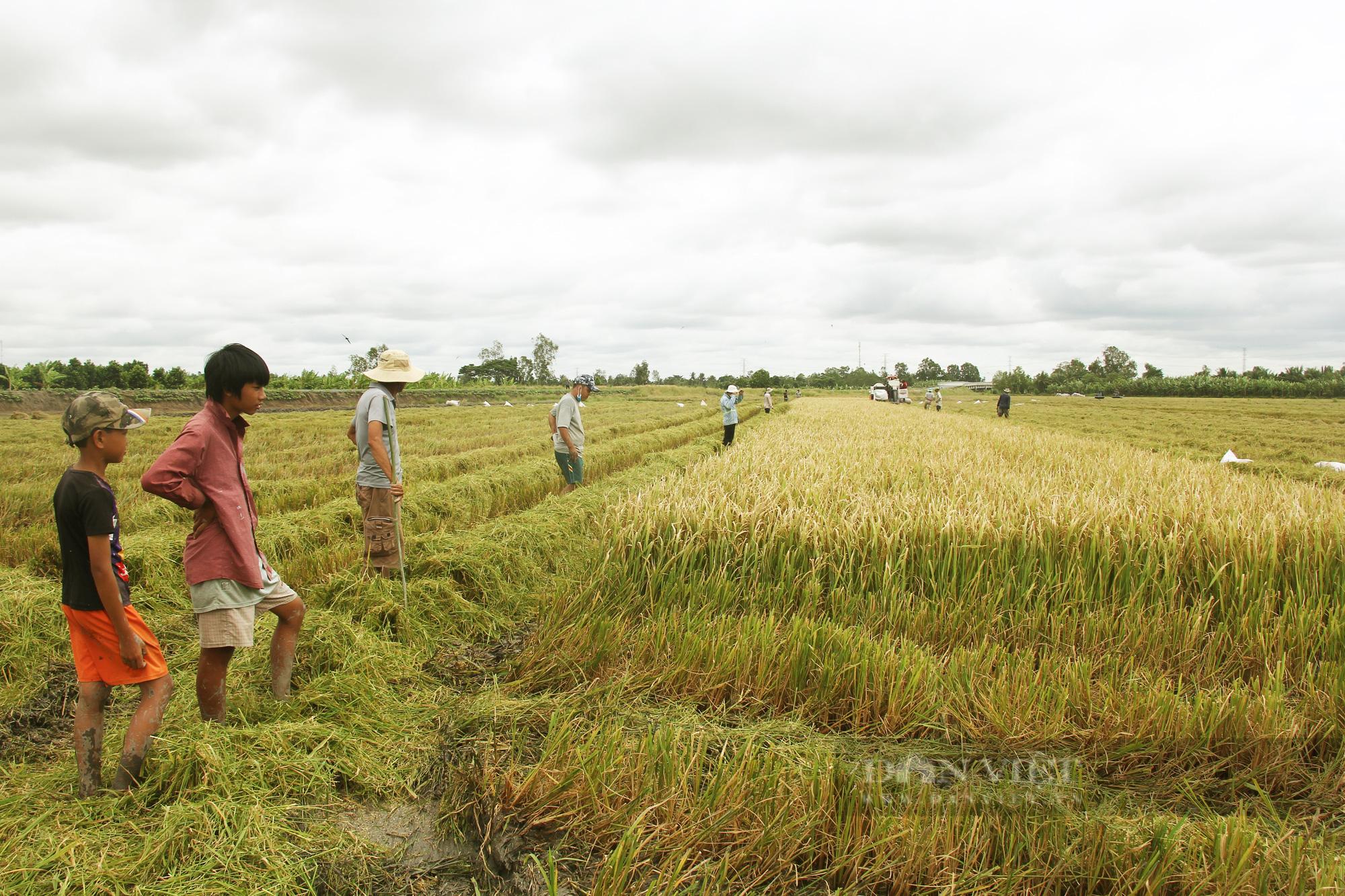 Thanh niên Cần Thơ rủ nhau đi bắt chuột đồng mùa thu hoạch lúa Thu Đông 2021 - Ảnh 2.