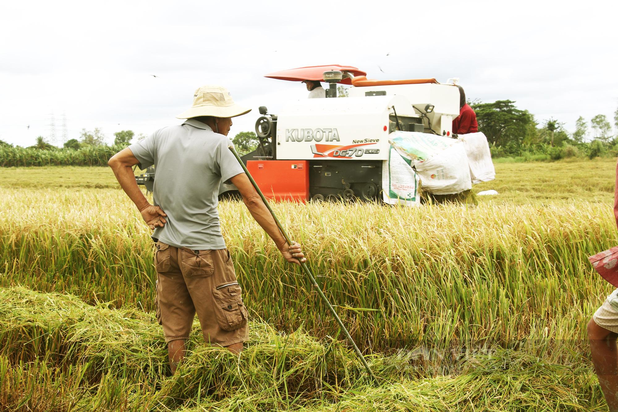 Thanh niên Cần Thơ rủ nhau đi bắt chuột đồng mùa thu hoạch lúa Thu Đông 2021 - Ảnh 3.