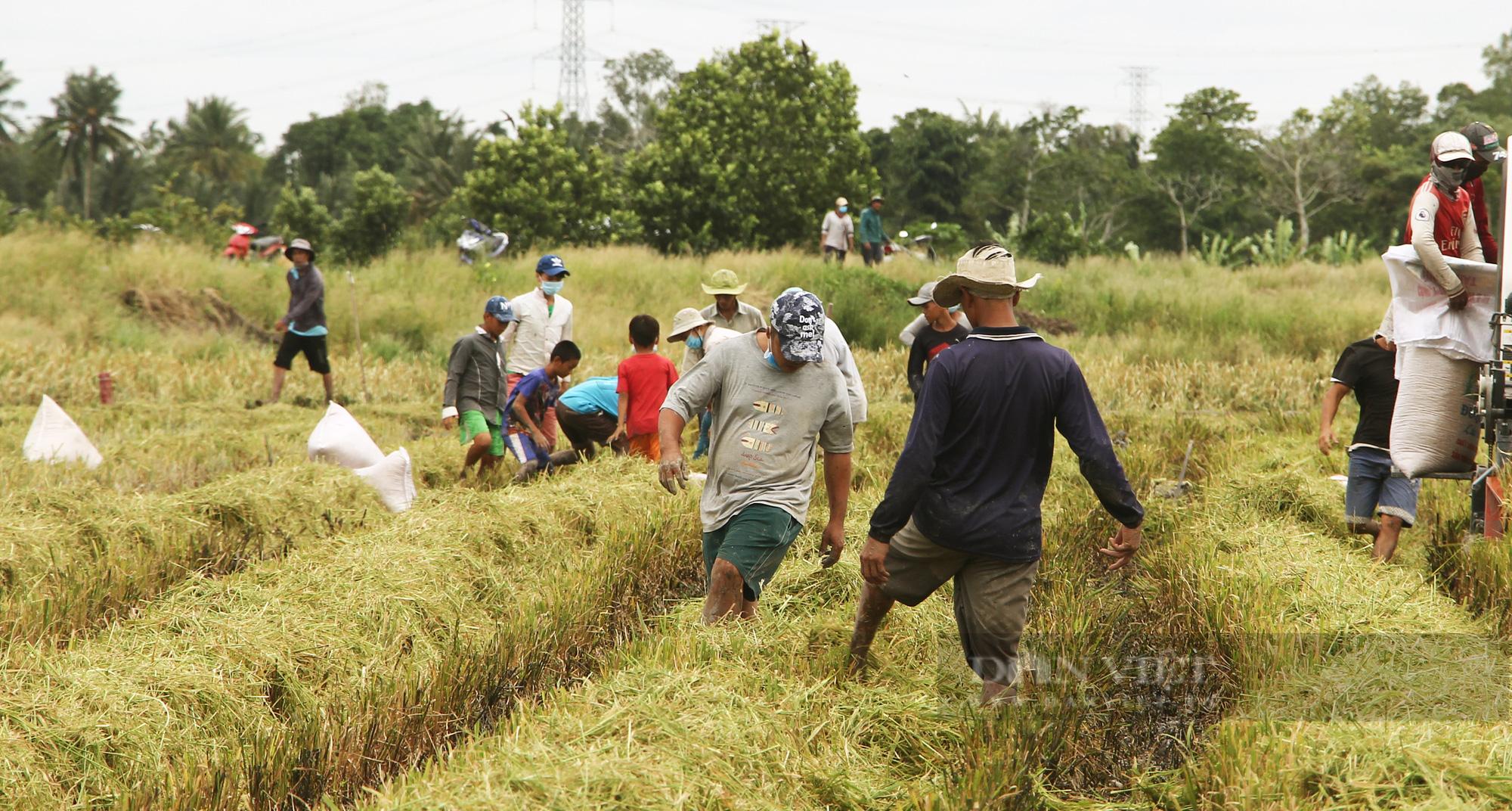 Thanh niên Cần Thơ rủ nhau đi bắt chuột đồng mùa thu hoạch lúa Thu Đông 2021 - Ảnh 4.