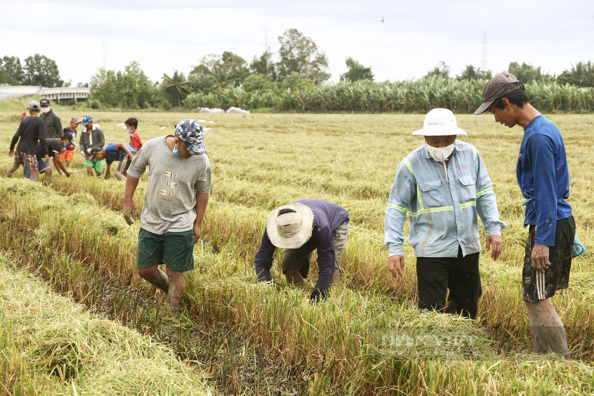 Thanh niên Cần Thơ rủ nhau đi bắt chuột đồng mùa thu hoạch lúa Thu Đông 2021 - Ảnh 5.