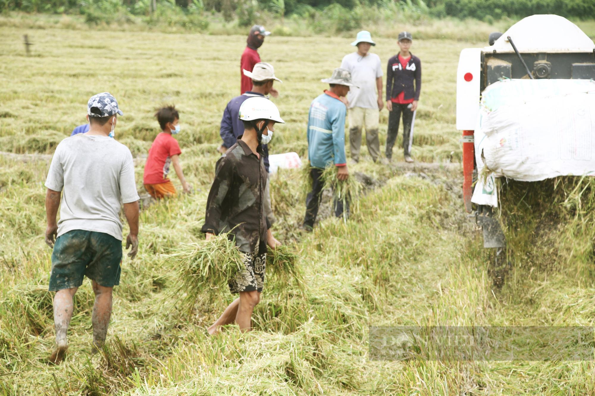 Thanh niên Cần Thơ rủ nhau đi bắt chuột đồng mùa thu hoạch lúa Thu Đông 2021 - Ảnh 6.
