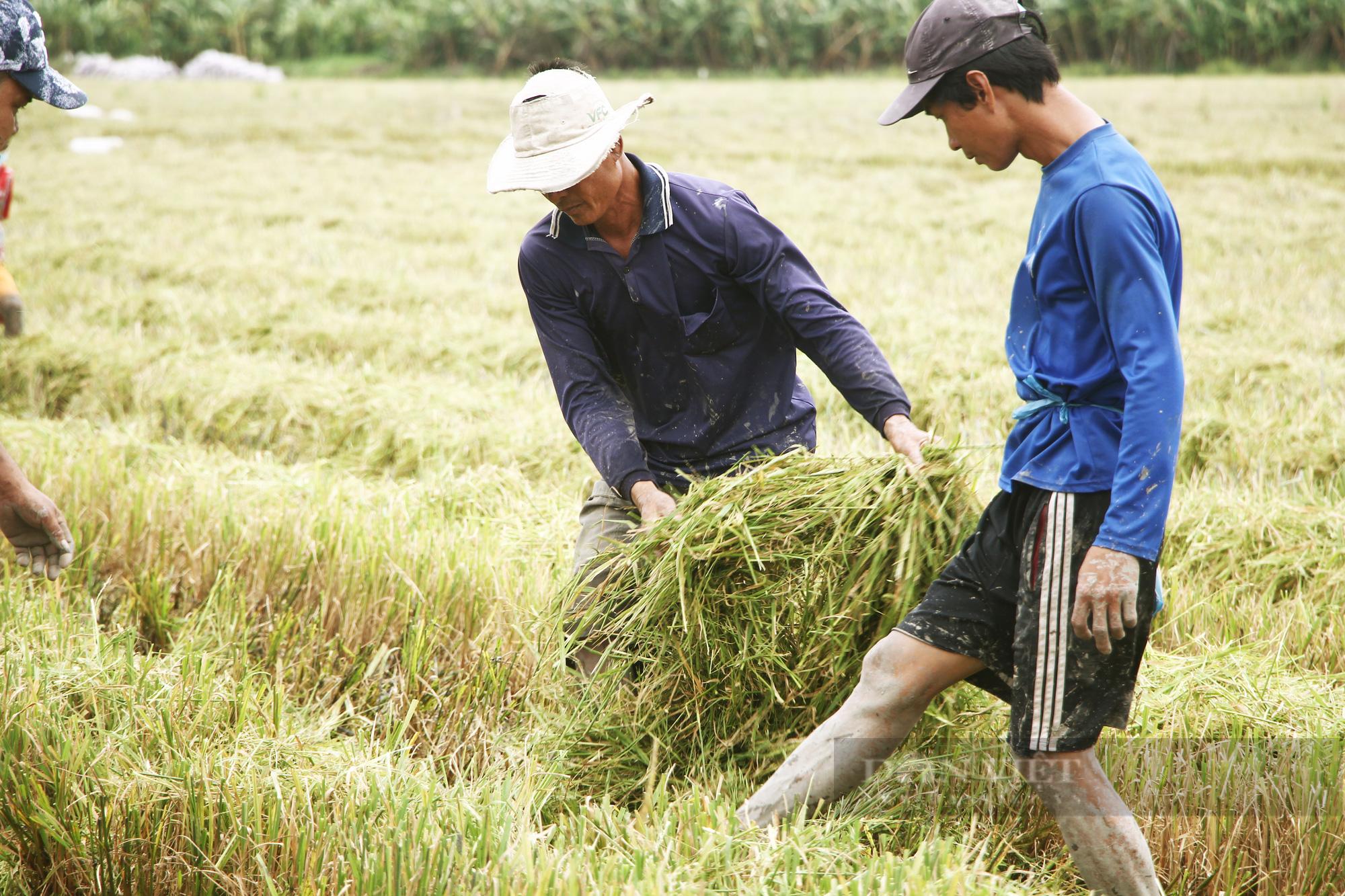 Thanh niên Cần Thơ rủ nhau đi bắt chuột đồng mùa thu hoạch lúa Thu Đông 2021 - Ảnh 7.