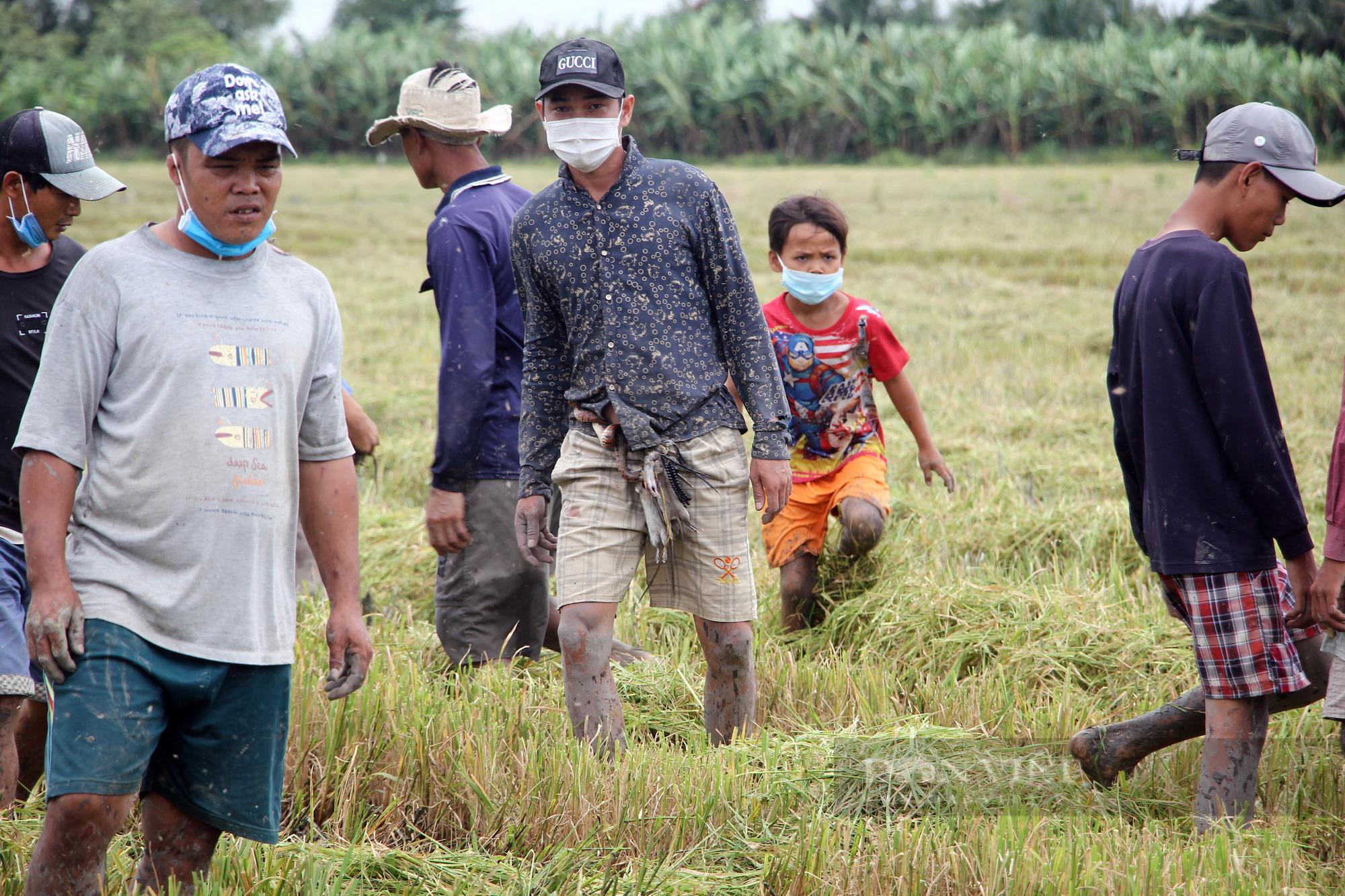 Thanh niên Cần Thơ rủ nhau đi bắt chuột đồng mùa thu hoạch lúa Thu Đông 2021 - Ảnh 8.
