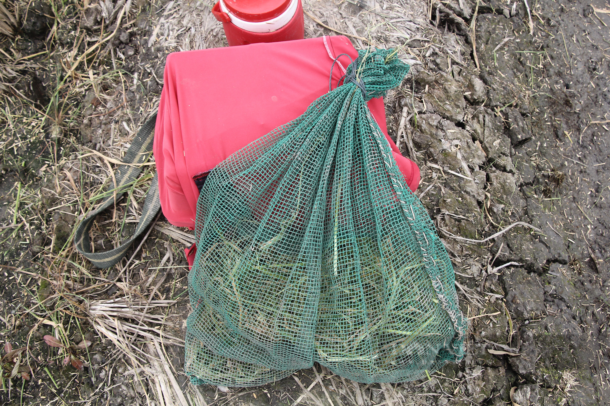 Thanh niên Cần Thơ rủ nhau đi bắt chuột đồng mùa thu hoạch lúa Thu Đông 2021 - Ảnh 11.