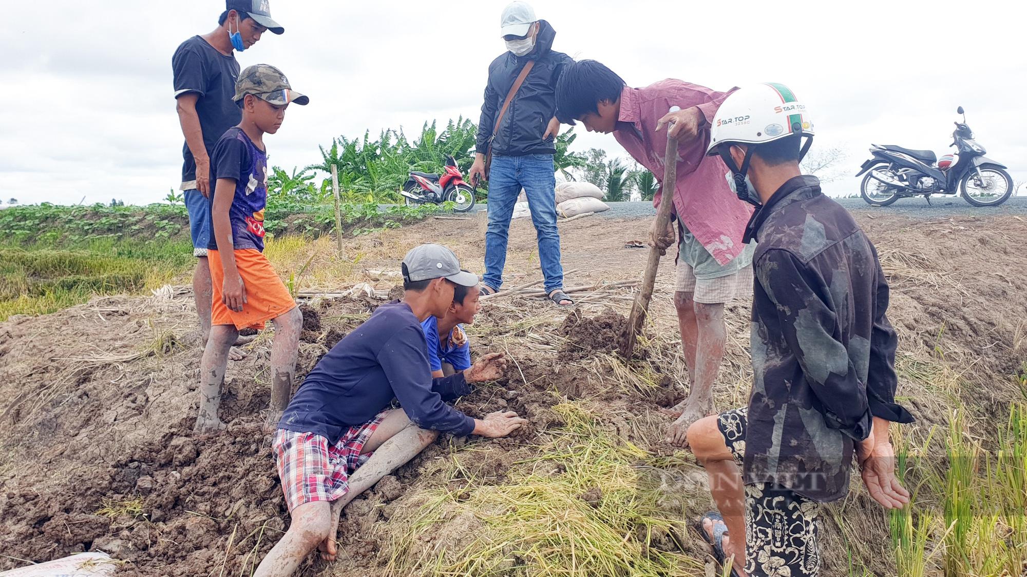 Thanh niên Cần Thơ rủ nhau đi bắt chuột đồng mùa thu hoạch lúa Thu Đông 2021 - Ảnh 12.