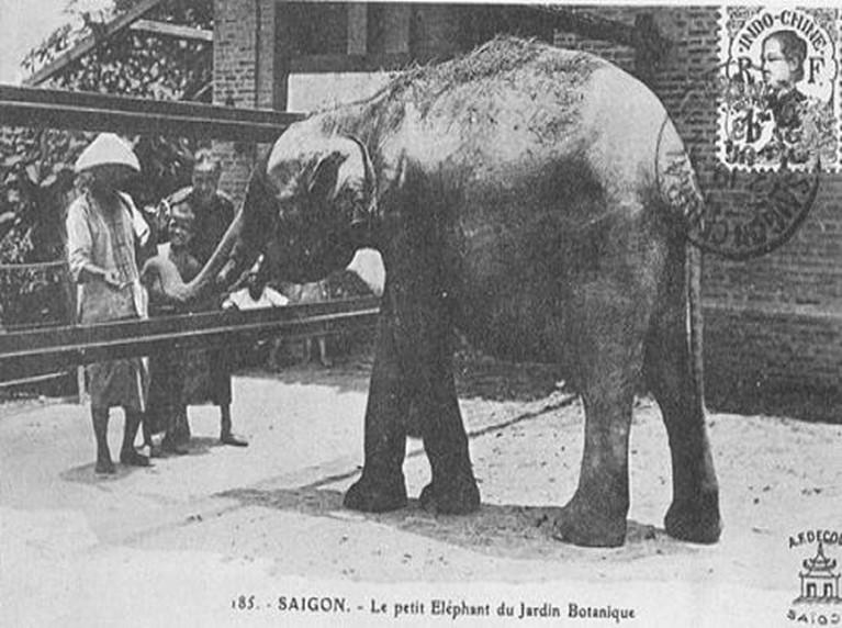 Chuyện dài ở Thảo Cầm Viên: Cuộc đời của những con thú và ký ức tuổi thơ nơi ai cũng phải đến một lần - Ảnh 5.