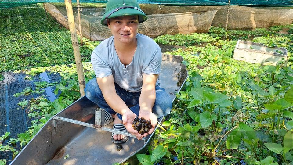 Hải Phòng: Bí kíp chàng nông dân bắt ốc bươu đen nhả 20 triệu đồng mỗi tháng - Ảnh 2.