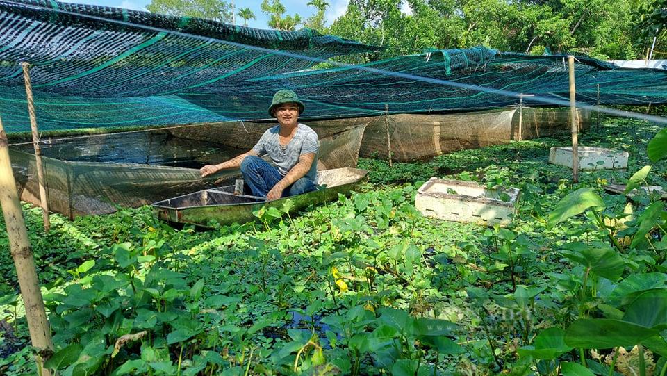 Hải Phòng: Bí kíp chàng nông dân bắt ốc bươu đen nhả 20 triệu đồng mỗi tháng - Ảnh 5.