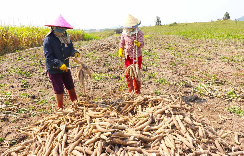 Trung Quốc vẫn mua, một loại nông sản của Việt Nam tăng trưởng đều - Ảnh 1.