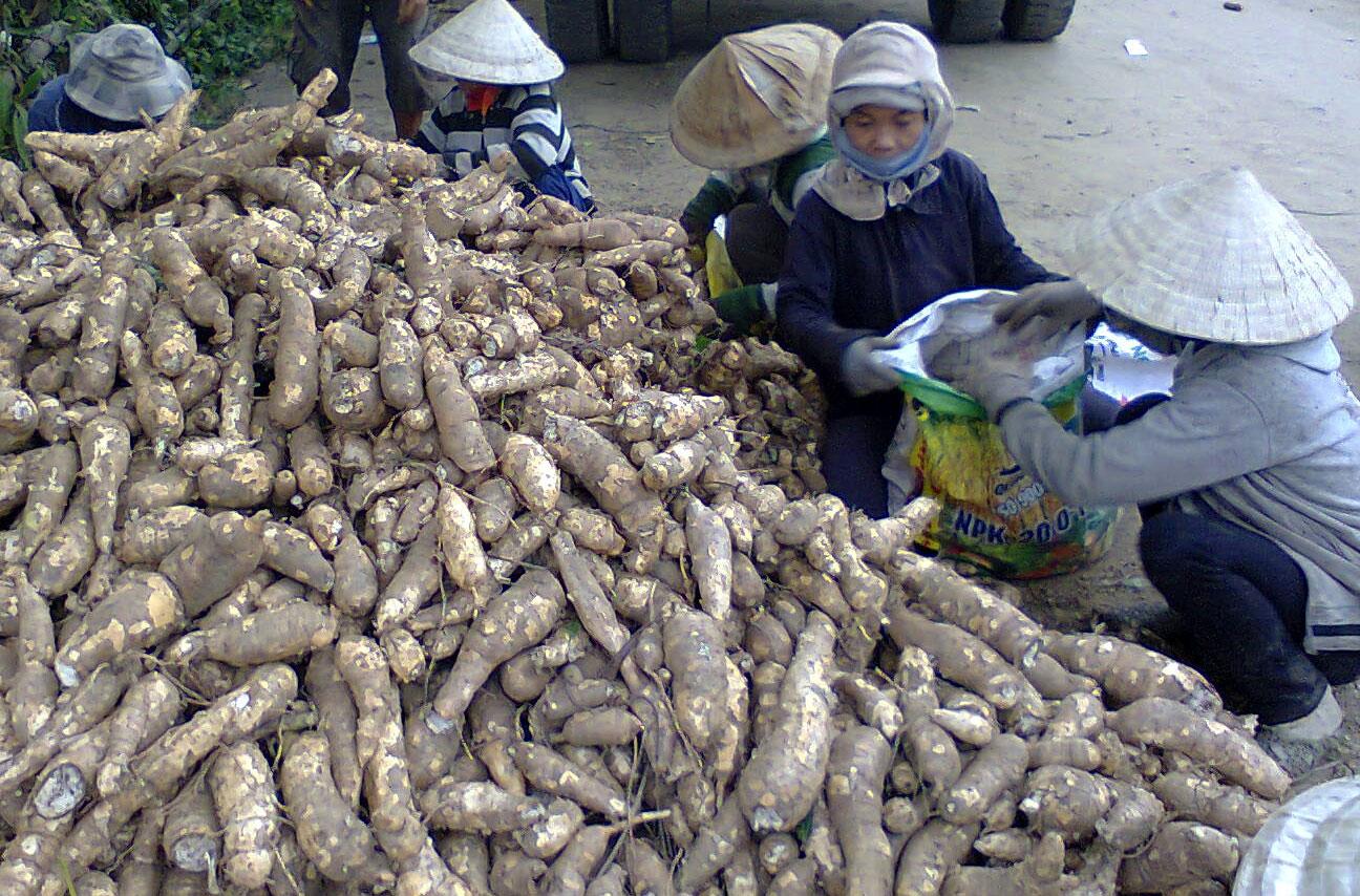 Trung Quốc vẫn mua, một loại nông sản của Việt Nam tăng trưởng đều - Ảnh 2.