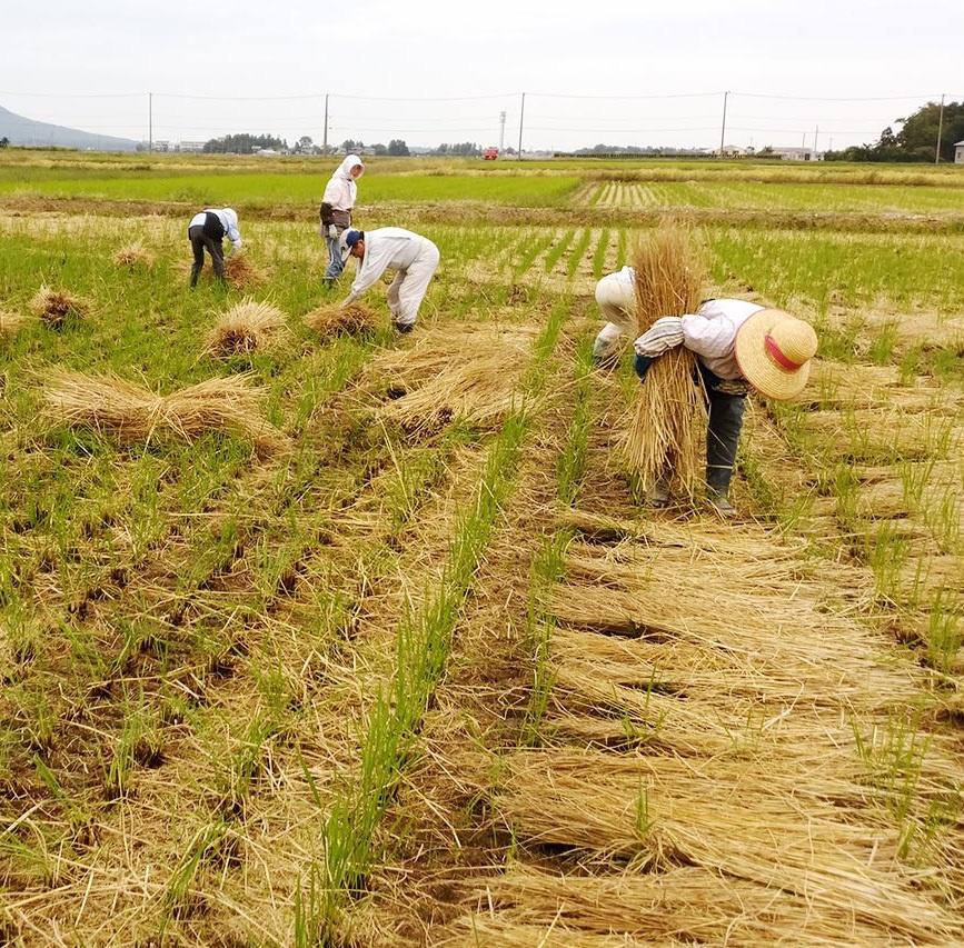 Ảnh: Nông dân Nhật Bản tạo ra các công trình nghệ thuật từ rơm rạ - Ảnh 6.
