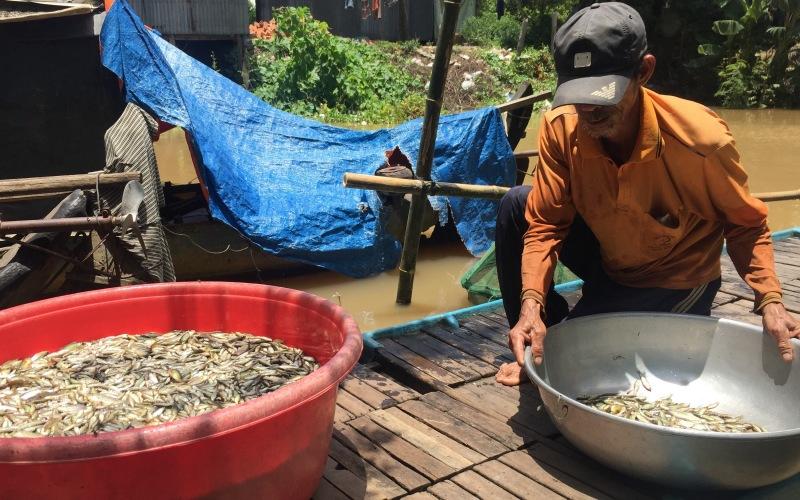 An Giang: Chưa năm nào thấy cá linh ít như năm nay, ở rốn cá còn ít thế này thì nơi khác sao nhiều được - Ảnh 1.