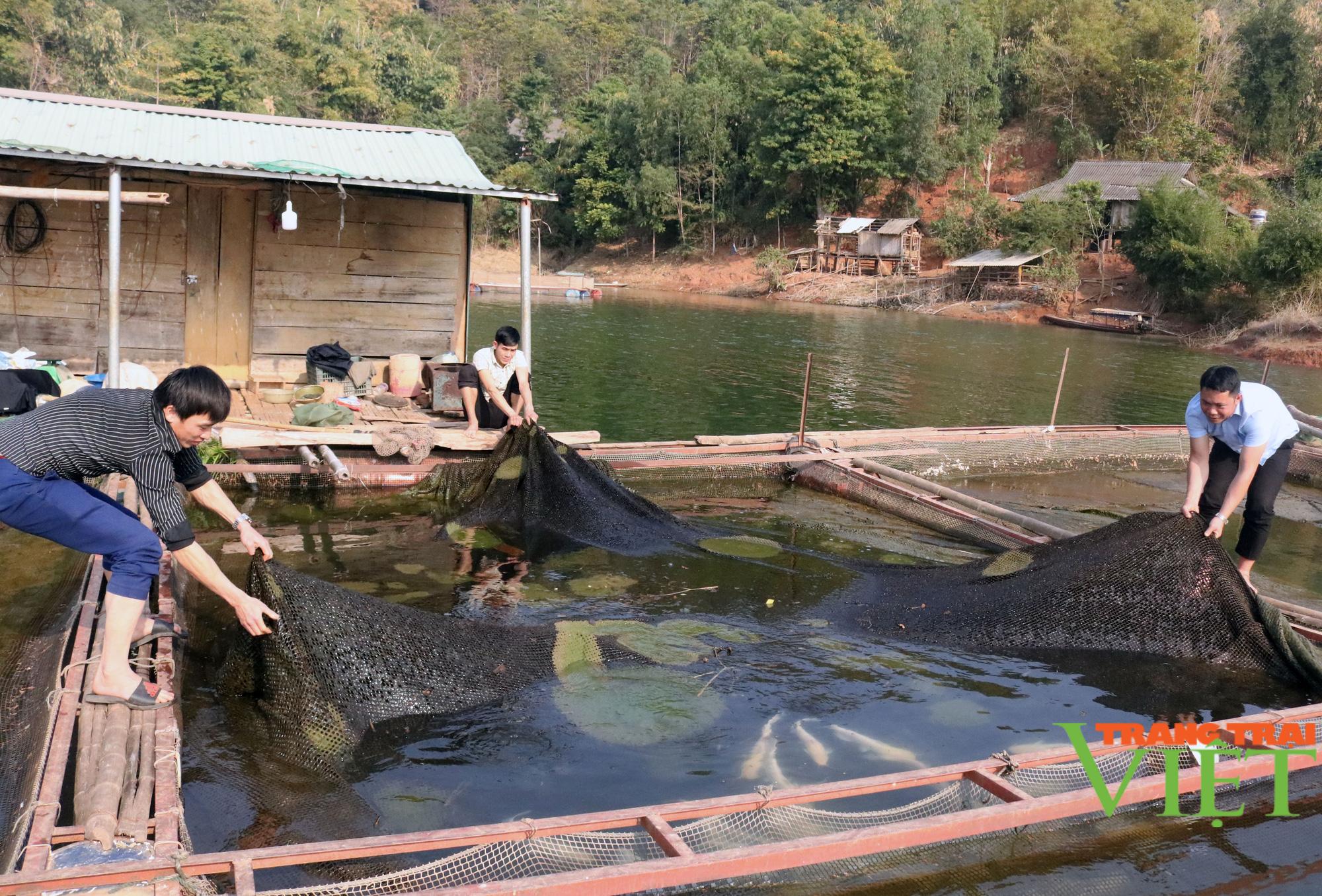 Nuôi cá lồng trên lòng hồ thủy điện Sơn La, người dân bản Ít có thu nhập ổn định  - Ảnh 1.