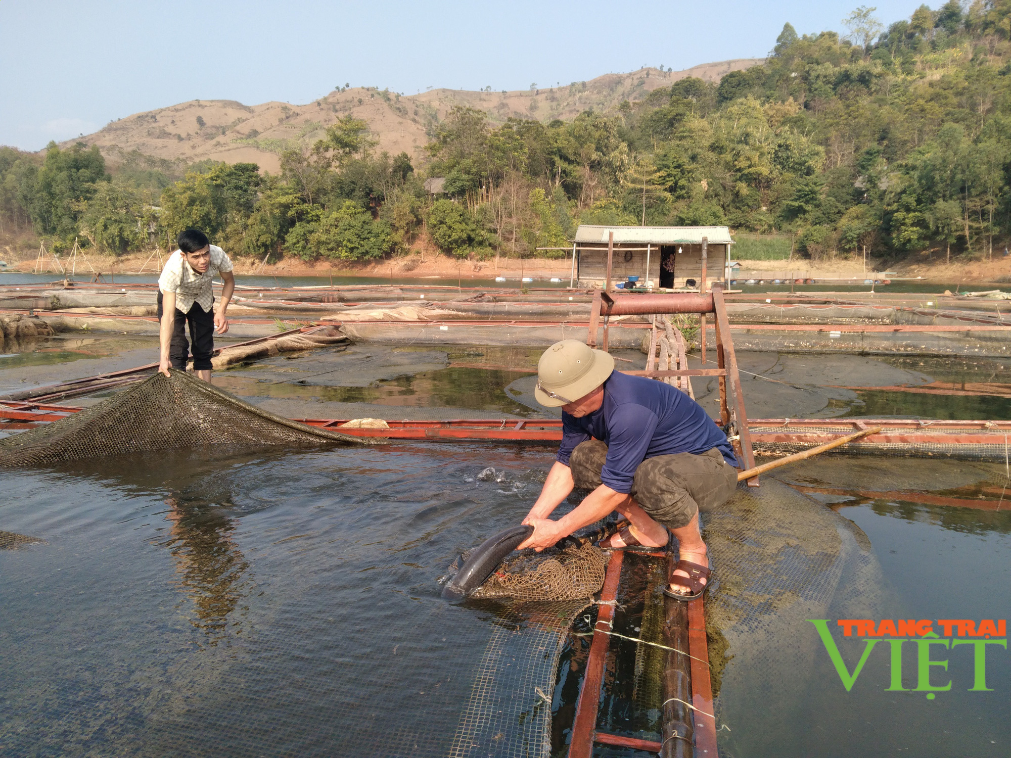 Nuôi cá lồng trên lòng hồ thủy điện Sơn La, người dân bản Ít có thu nhập ổn định  - Ảnh 2.