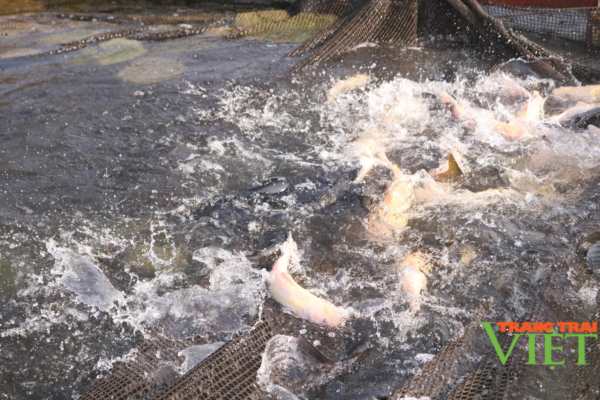 Nuôi cá lồng trên lòng hồ thủy điện Sơn La, người dân bản Ít có thu nhập ổn định  - Ảnh 3.