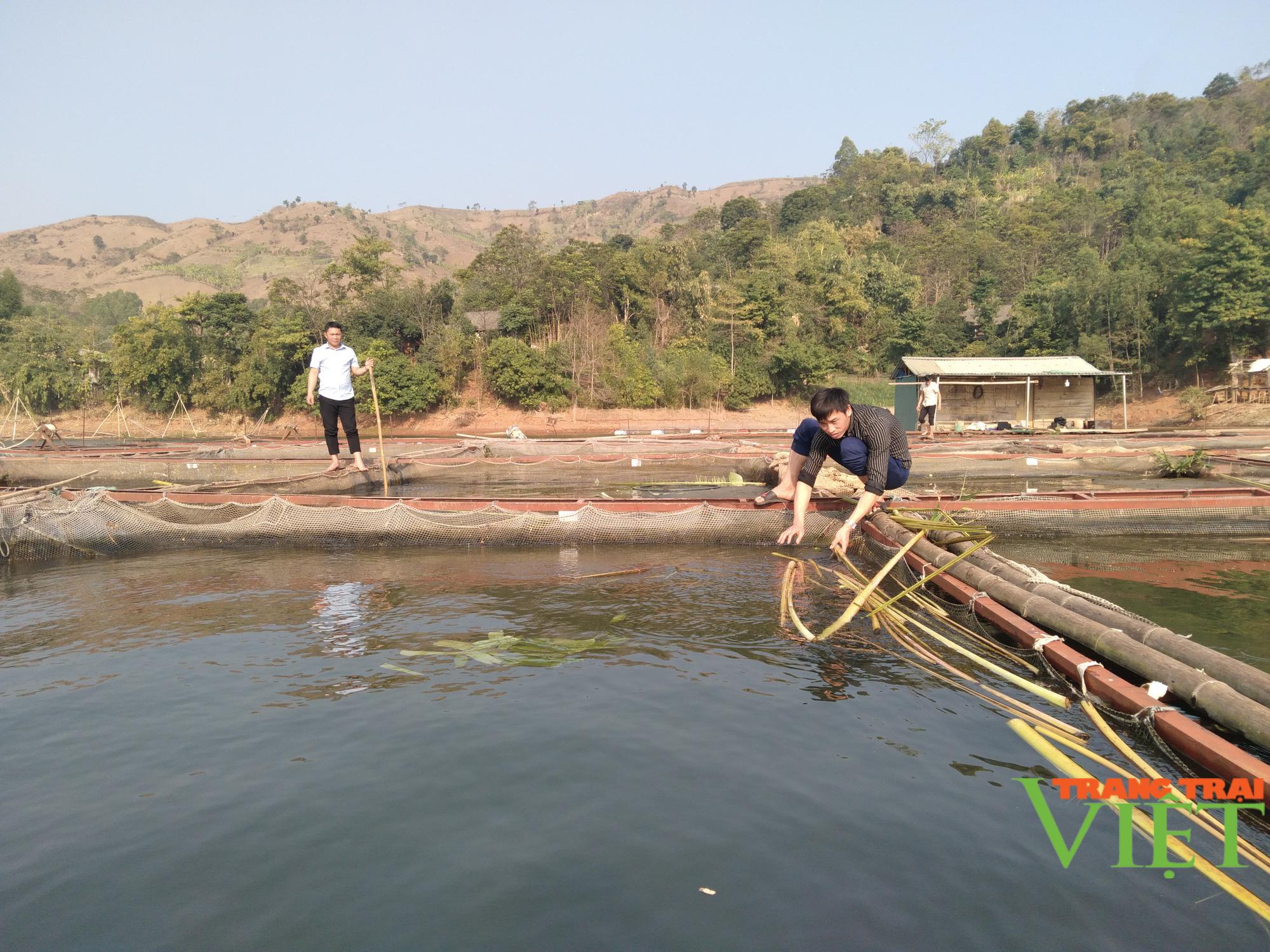 Nuôi cá lồng trên lòng hồ thủy điện Sơn La, người dân bản Ít có thu nhập ổn định  - Ảnh 4.