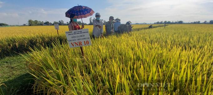 Quảng Ngãi: Nông dân phấn khởi với các giống lúa mới của Vinaseed chống chịu được thời tiết khắc nghiệt - Ảnh 1.