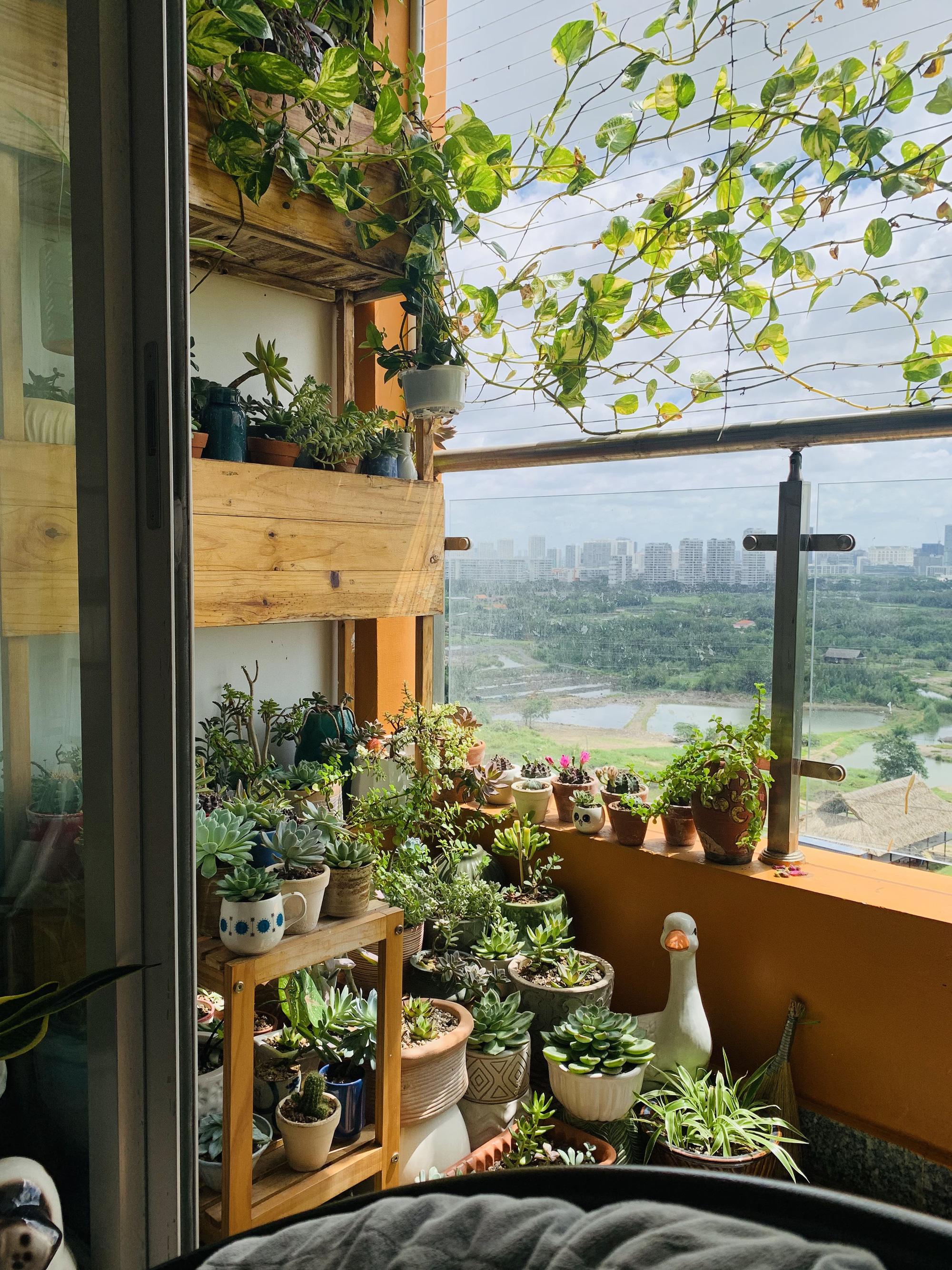 Vườn sen đá ở ban công 3 m2 - Ảnh 1.